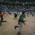 Bull in the Plaza de Toros